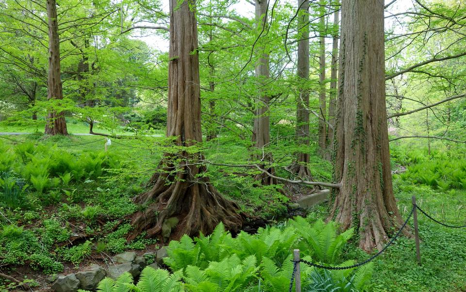 Trees-in-a-green-forest-in-spring-0513141141906AE5