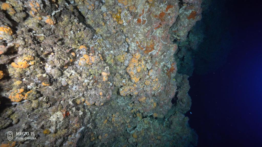 Meizu 15 Подводный свет