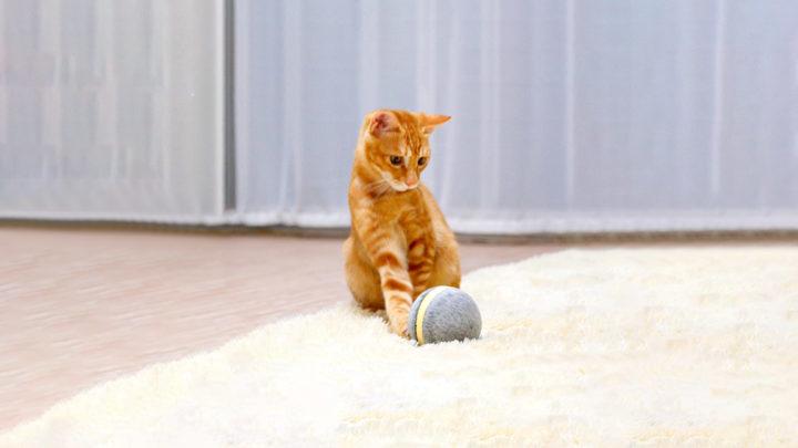 Кот и мячик