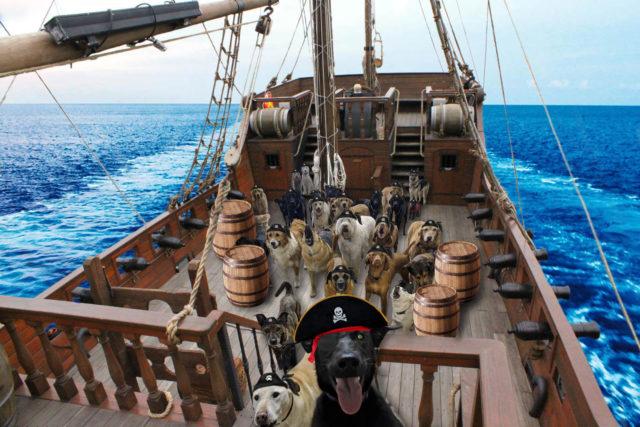 Собаки на корабле