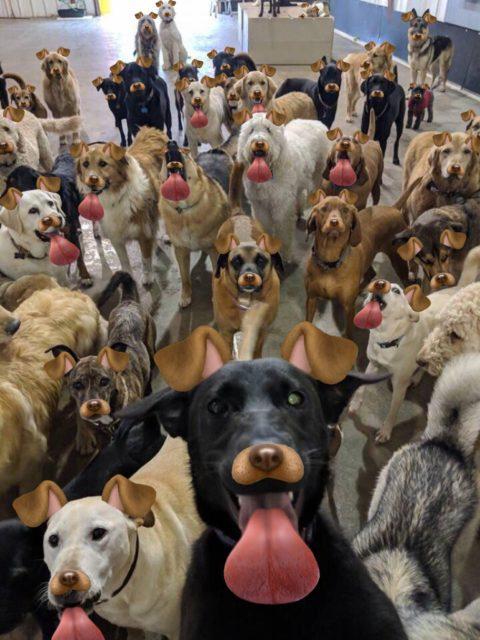 Собаки с языками