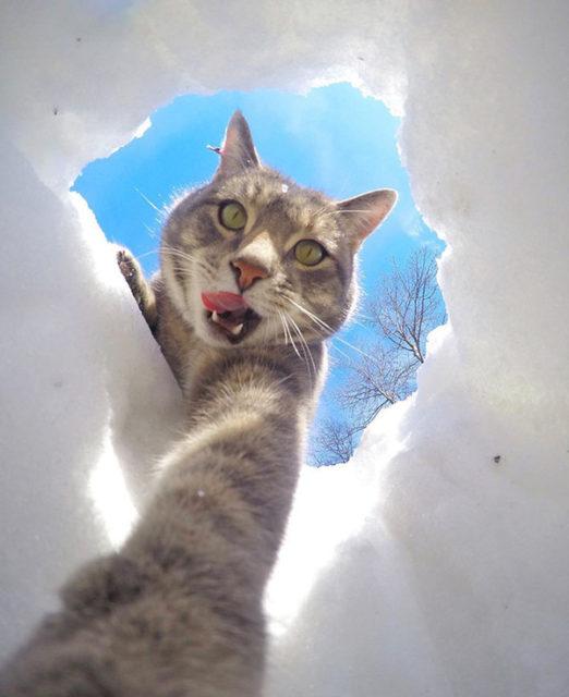Кот в сугробе