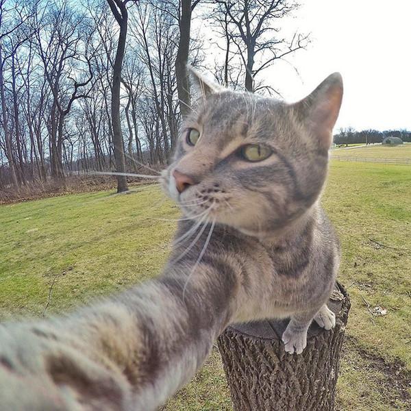 Кот в объективе