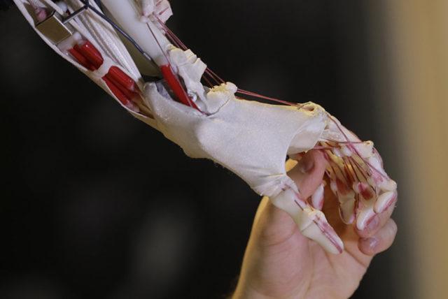 Экзокисть и рука