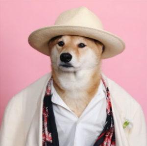 Пес в костюме и шляпе