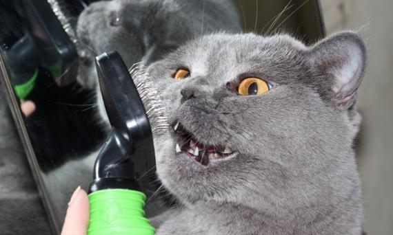 Умная расческа для кота
