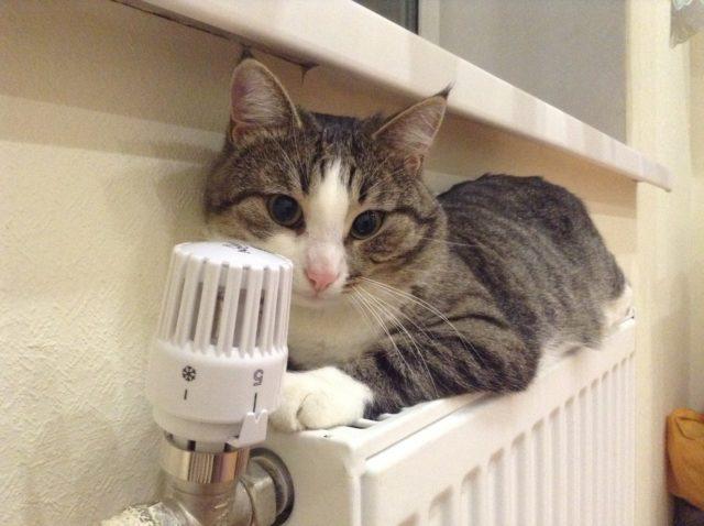 Кот на радиаторе отопления