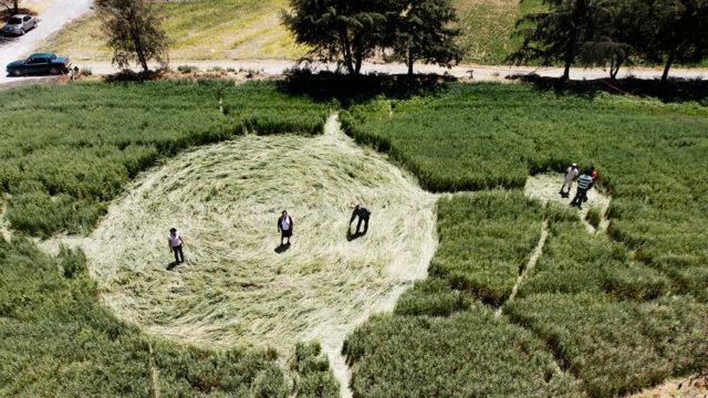 Загадочные круги на поля