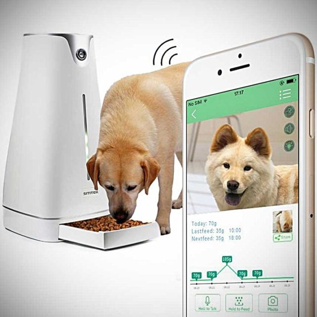 Собака и смартфон