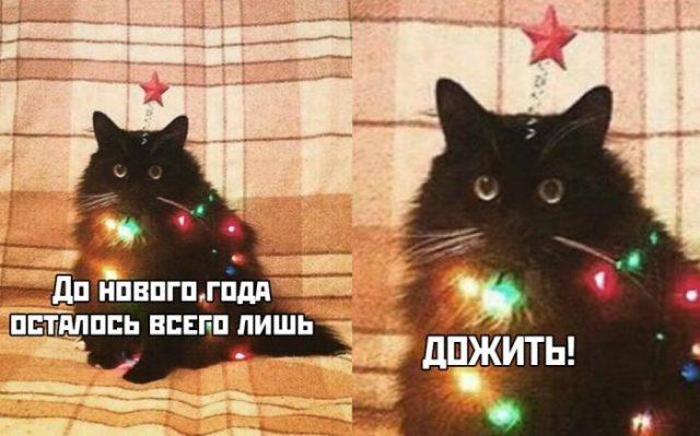 Кот со звездочкой и фонариками
