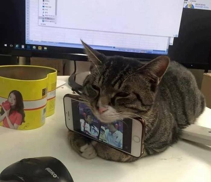 кот подставка для смартфона