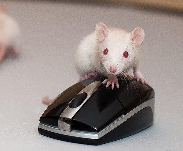 Компьютерная мышка с настоящей